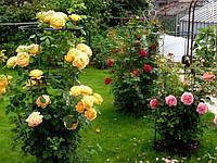 Садовая опора большая для роз, подставка для цветов, фото 1