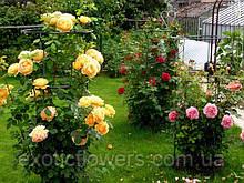 Садова велика опора для троянд, підставка для квітів