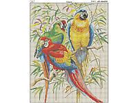 Схема вышивки бисером на габардине Попугаи