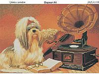 Схема вышивки бисером на габардине Собачка и патефон