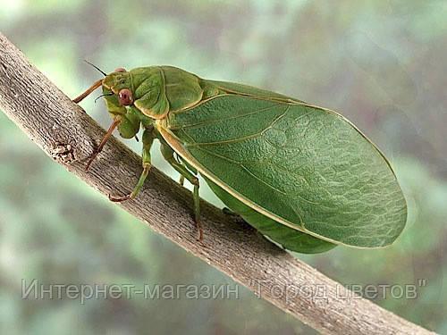 Маленькие насекомые сосут сок листьев