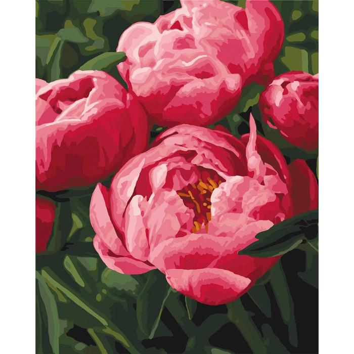 Картина по номерам Роспись Любимые цветы пионы КНО3049