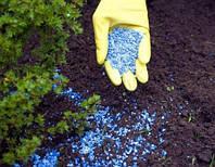 Как правильно подкармливать хвойные растения весной