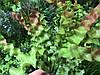 Травка искусственная для декора, водоросли  ( ветка 28 см )