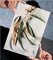 Фоторамка-клип (антирама, фоторамка клеммерная) Стеклопластик. Для грамот, дипломов, сертификатов, фото.