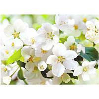Фотообои Prestige Цветущая вишня №10