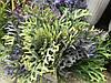 Травка искусственная для декора, водоросли искусственные  ( ветка 24 см )