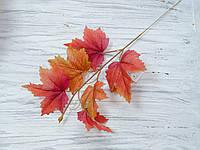 Листья клена осенние- красные с коричневым, фото 1
