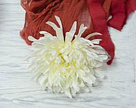 Головка хризантемы молочной  гигант