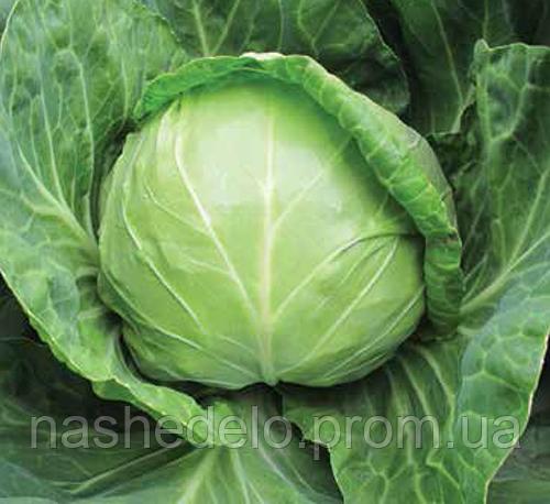 Семена капусты б/к Анадоль F1 2500 сем. Nunhems