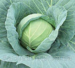 Семена капусты б/к Габриель F1 2500 сем. Nunhems