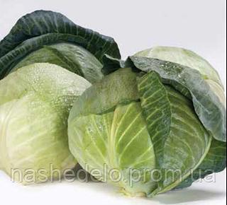 Семена капусты б/к Акварель F1 2500 сем. Nunhems