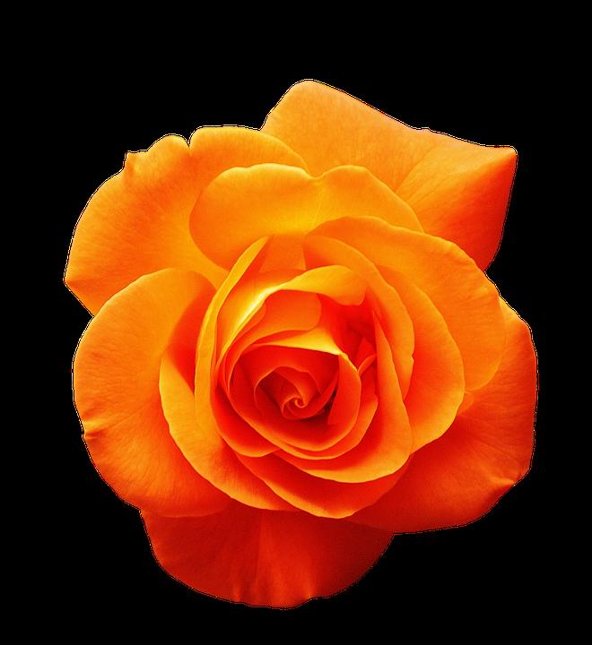 Флористическая краска оранжевая