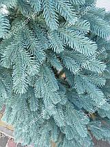 Лита ялинка Елітна 2.30 м. блакитна / Лита ялинка / Смерека, фото 2