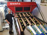 Бо лінія прийому миття і сортування яблук 6000 кг/год Aweta, фото 4