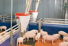 Кормушки для свиней бункерные