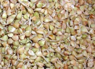 Зелена гречка для пророщування (пакет 2 кг.)