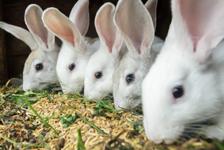 Товары для кроликов