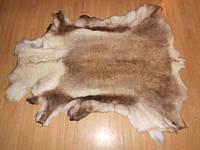 Шкура оленя (финского) XXXL, фото 1