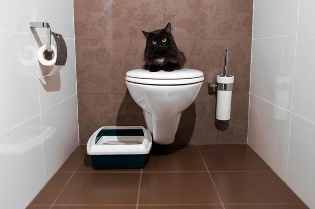 Туалеты для животных