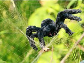 Павук волохатий на Хелловін, 30 см, Паук декоративный на Хэллоуин