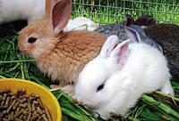 """Комбікорм для кролів """"Старт"""" в гранулі від ТМ """"ComFerma"""" 25 кг"""