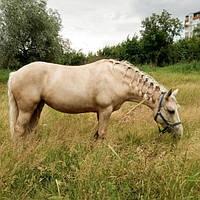 Продаётся лошадь (кобыла)  Возрост : 8 лет Рост : 155 Кличка : Афина  Цена: 23 000 грн  Г. Харьков