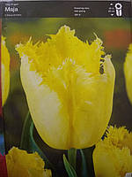 Тюльпан луковица махровый Tulip  fringed Maja желтого цвета, Голландия