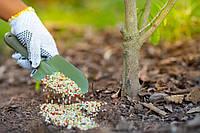 Как правильно подкармливать деревья весною