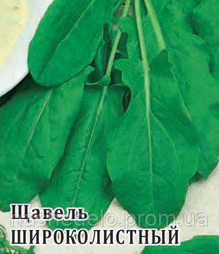 Семена Щавеля Широколистного 50 гр. Гавриш