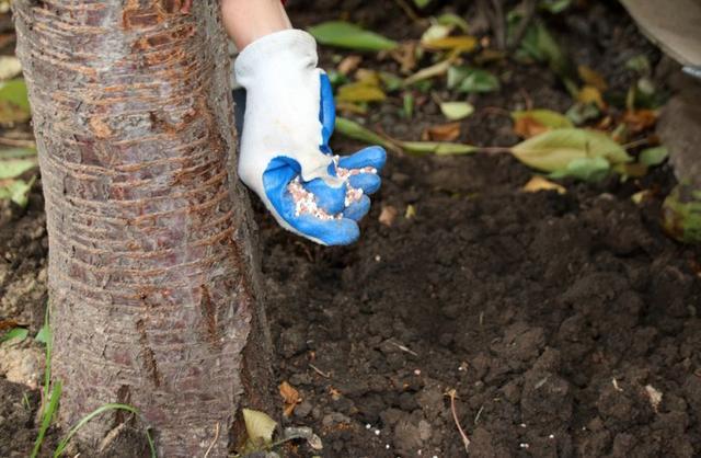 Гранулированные удобрения для растений