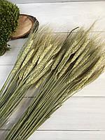 Пшеница натуральная ( упаковка 50 гр )