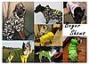 Дощовик, жилет для собаки, з світловідбивачами, фото 6