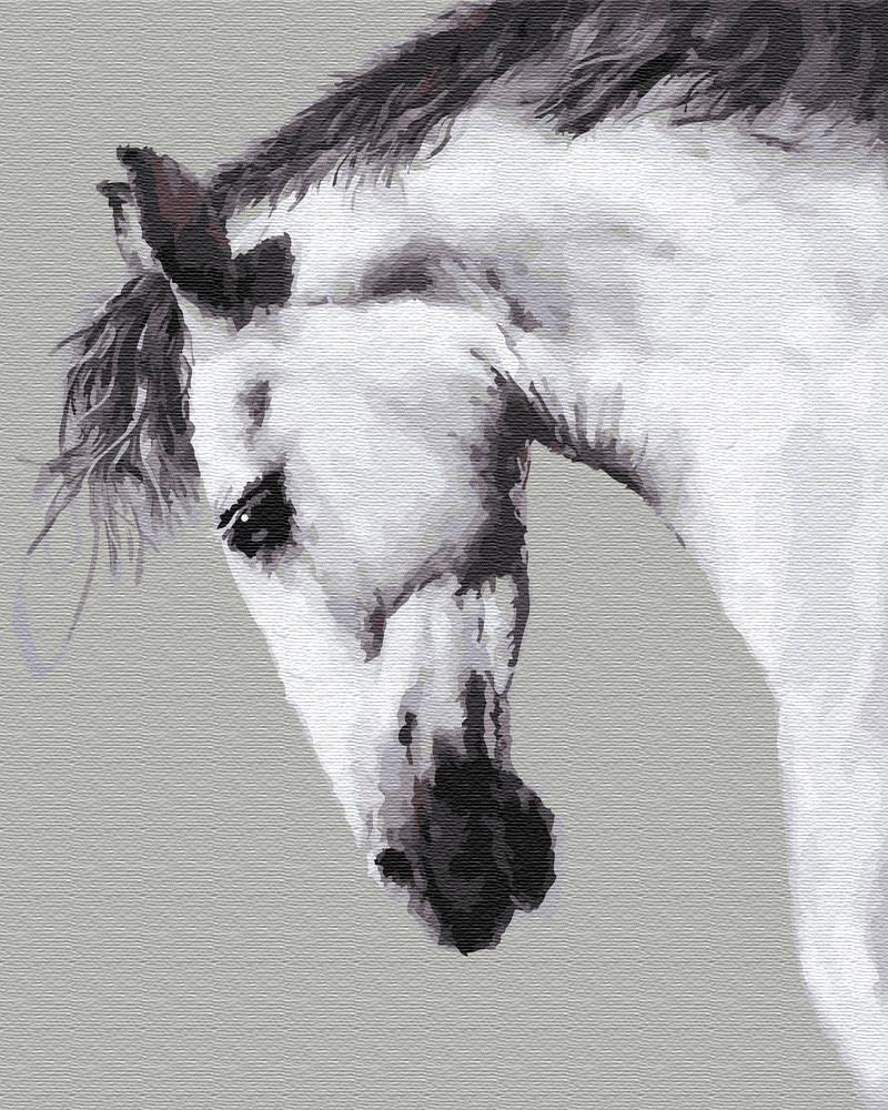 Живопись по номерам Белая лошадь (BRM25707) 40 х 50 см Brushme