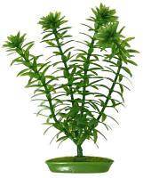 Искусственное растение Hagen Anacharis Mini