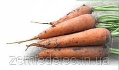Мацури КС 7  Ф1 10000 сем. морковь шантане Китано