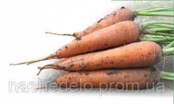 Семена моркови Мацури (KS 7) F1 10 000 сем. Kitano
