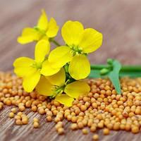Горчица желтая (на сидераты) — восстанавливает бедные почвы, 1 кг