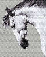 Картина по номерам без коробки. Конь, 40*50 см.