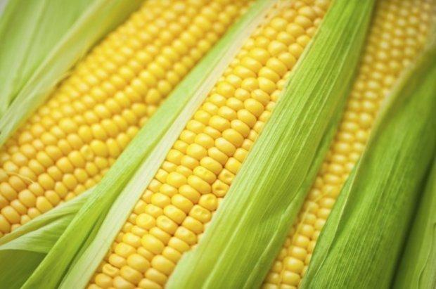 Цукрова кукурудза Ларус, Сахарная кукуруза Ларус