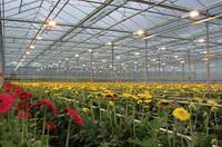 Натриевая лампа ДНаТ - применение в тепличном выращивании агрокультур