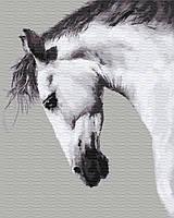 Картина по номерам в коробке. Конь, 40*50 см.