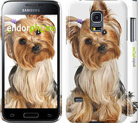 """Чехол на Samsung Galaxy S5 mini G800H Йоркширский терьер с хвостиком """"930c-44"""""""