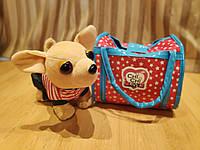 Стильная собачка в сумочке Chi Chi Love