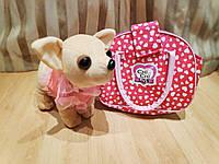 Собачка chi chi love чихуахуа в сумке