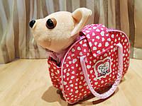Милая собачка в сумочке Chi Chi Love
