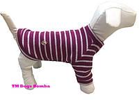 Свитер из ангоры для собак малиновый с полосами