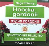 Hoodia Gordonii - Порошок для похудения (Худия Гордони) ViP, фото 2