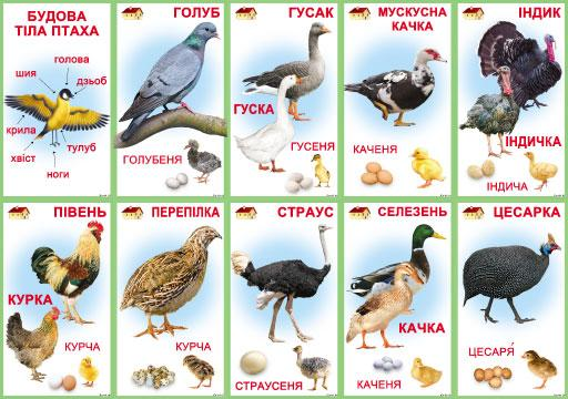"""Комплект карточек 10 шт. """"Птицы домашние"""" Км.-089"""