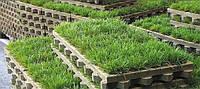 Газонная решетка экопарковка: зеленая парковка - газонная решетка ТТЕ